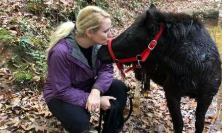 How Horses Turned Me Into a Hiker