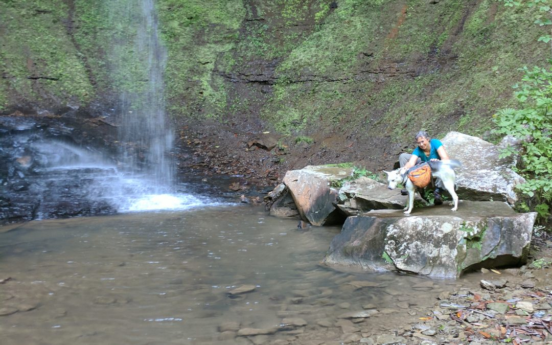 Becoming a Backpacker: Hiking the Sheltowee Trace