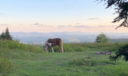 Days 44-62 on the AT: Damascus to McAfee Knob